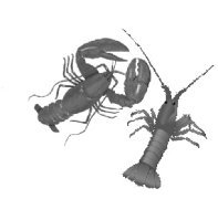 image of a cold water and warm water lobster