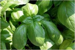 Cooking with Fresh Herbs Guide