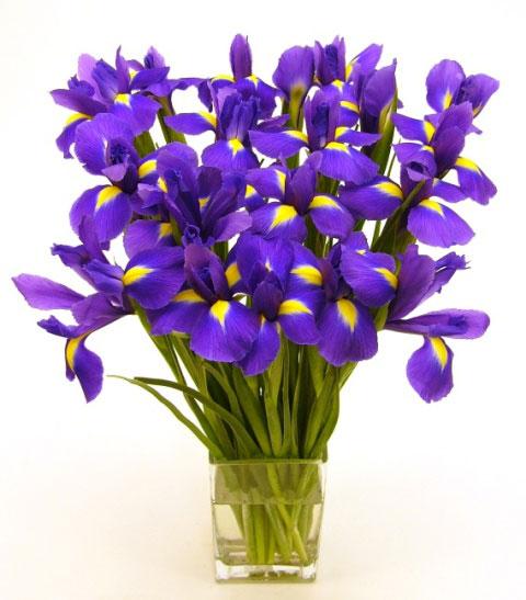 bouquet of violets